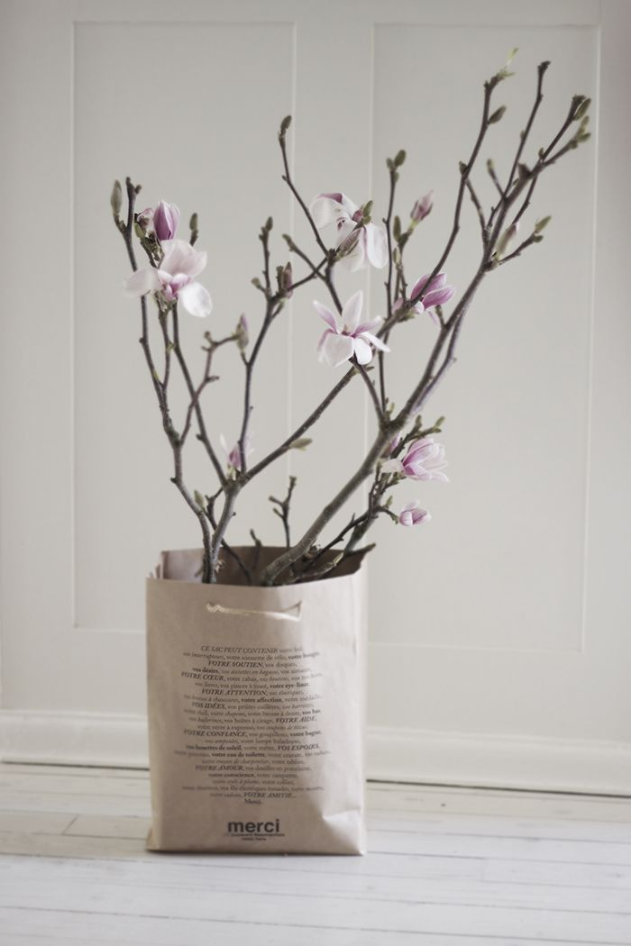 Magnolia Bluhende Pflanzen Schone Blumen Fruhling Blumen