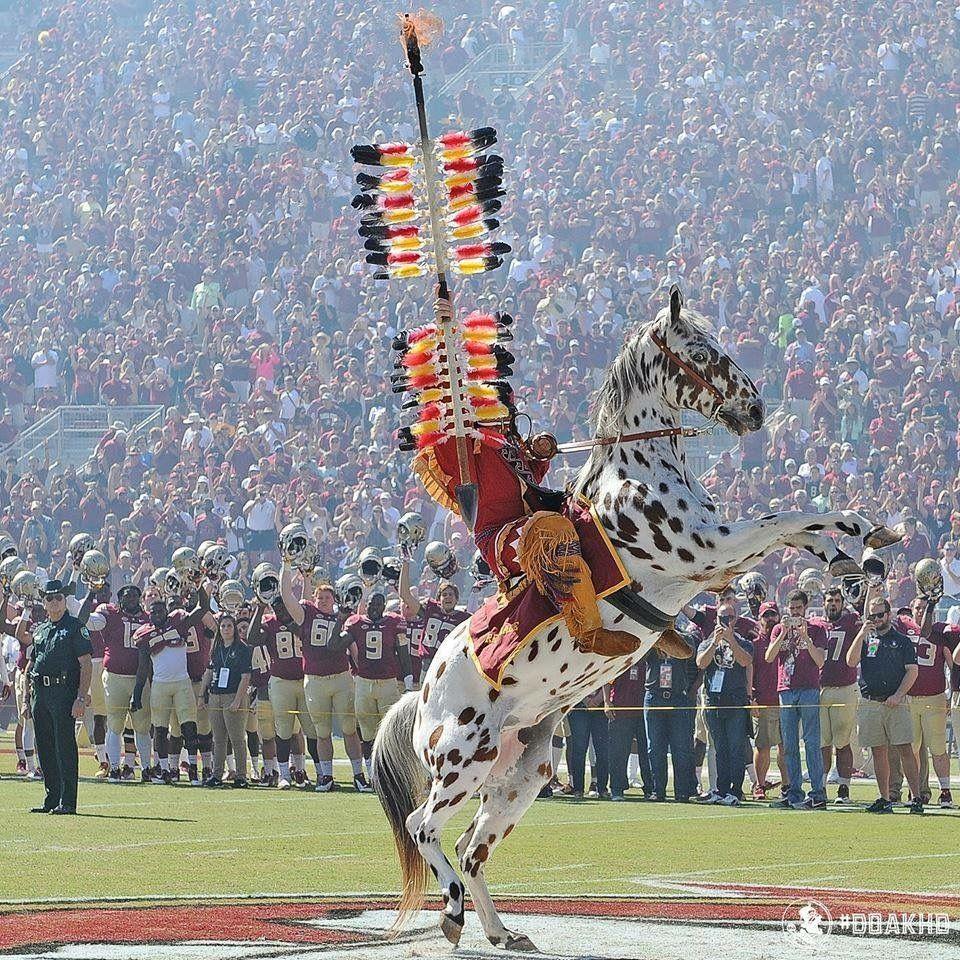 Fsu Mascot S Osceola Renegade Florida State Football Florida State Seminoles Osceola