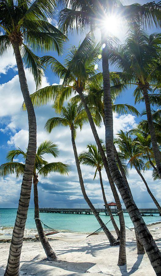 Aaron chang vertical palms key west - Wallpaper florida keys ...