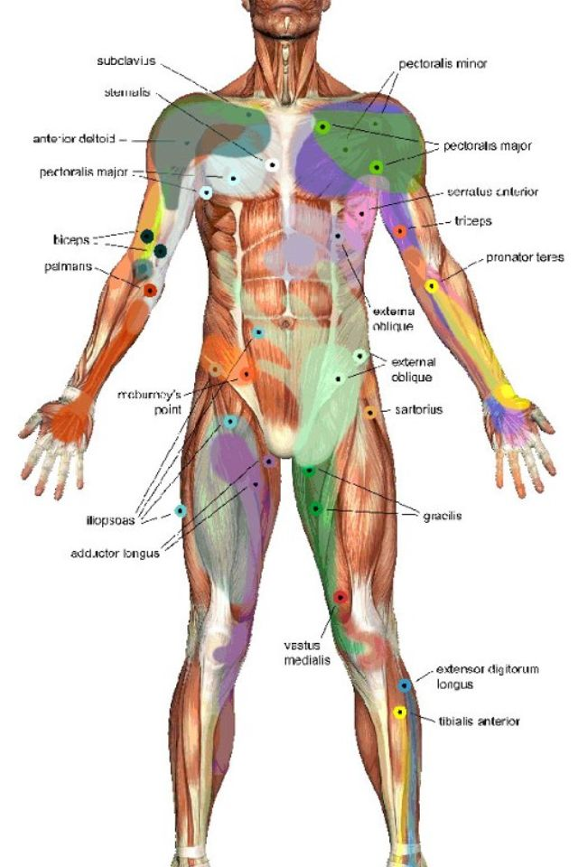 Anatomy muscles http://anatomieducorpshumain.blogspot.com/ | Biology ...