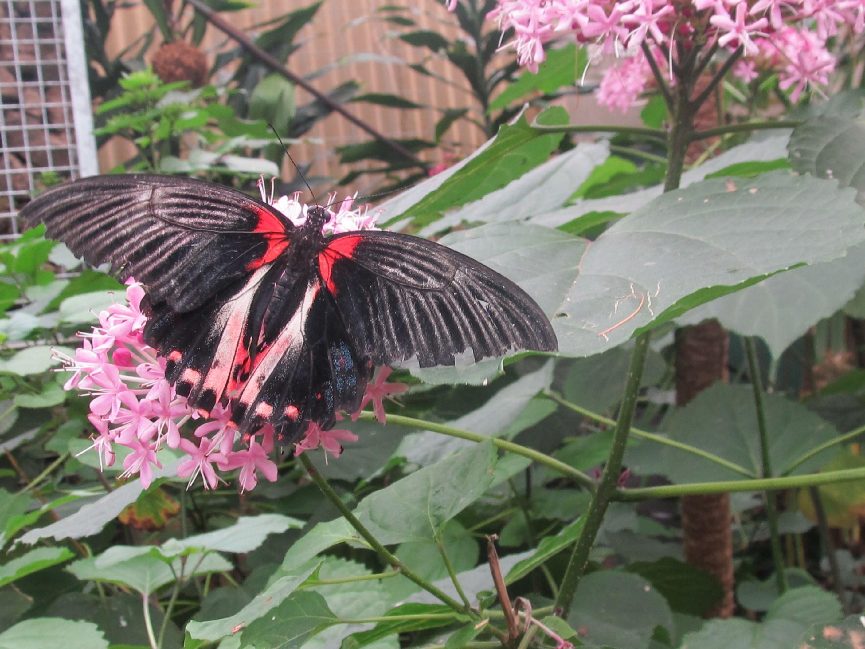 Butterfly creekauckland nz tattoo ideas pinterest