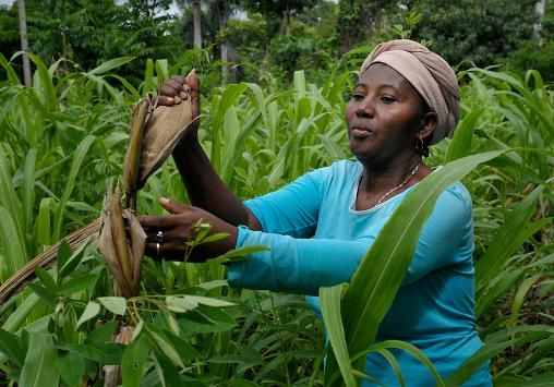 Image result for women farmers caribbean