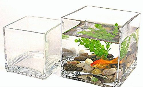 Decorative Glass Fish Bowls Extraordinary Google Image Result For Httpwwwthewallaquariumimages Decorating Design