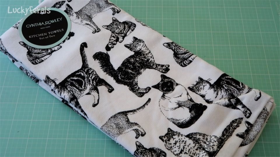 Lucky Ferals One Year Channelversary Giveaway! Feral Cats