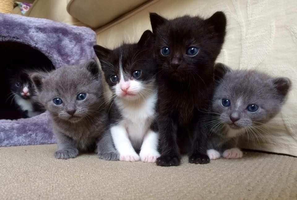 My Friend Is Giving Away Kittens In Sydney Cute Little Animals Cute Animal Pictures Cute Animals