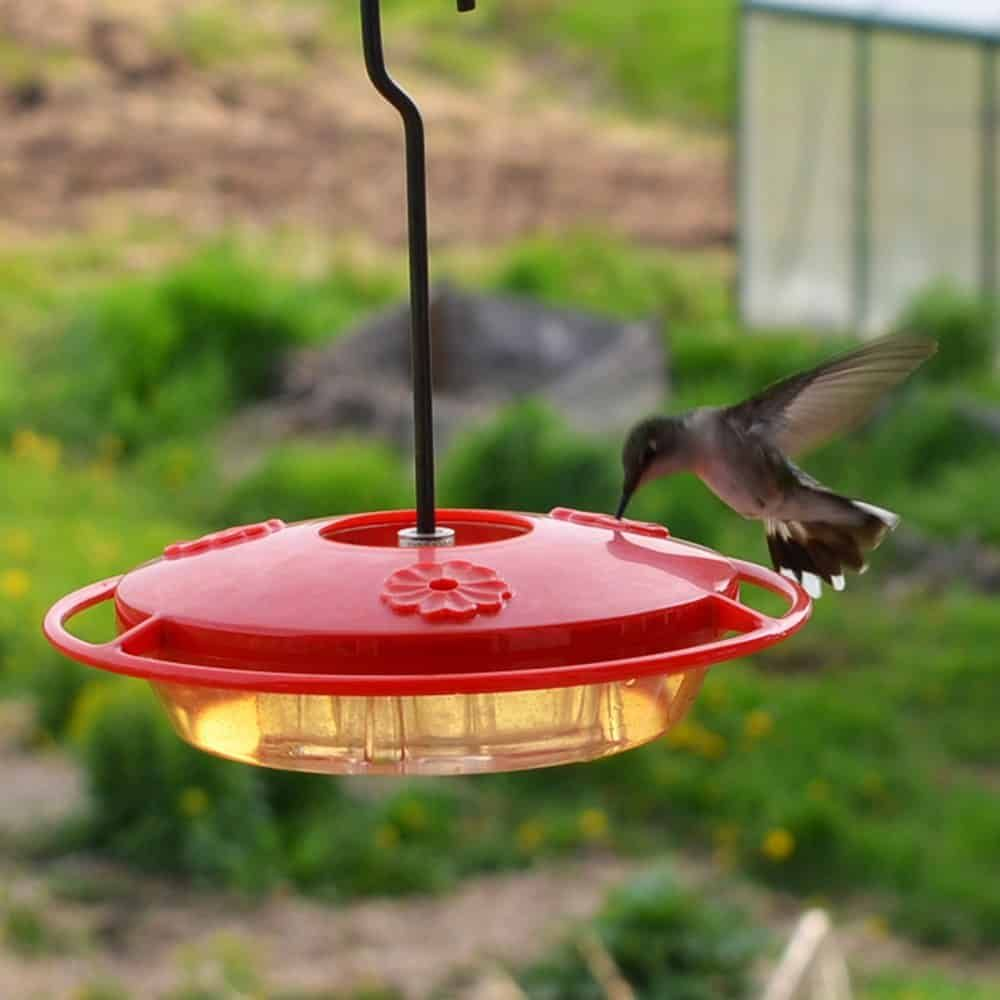 Homemade Hummingbird Food Recipe And The Best Hummingbird Feeder For Barbara Hummingbird Food Homemade Hummingbird Food Food