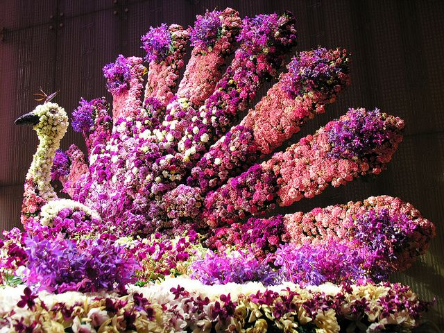 Floral peacock by Roving I, via Flickr