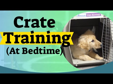 How To Crate Train A Puppy At Night Crate Training For Puppies Youtube Puppy Training Crate Training Crate Training Puppy