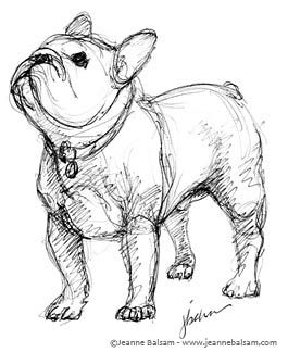 French Bulldog Sketches Iii French Bulldog Drawing French