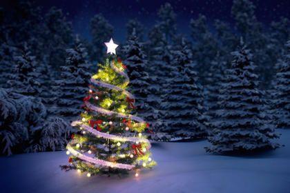 Christmas Tree Bill.Pin On Xmas