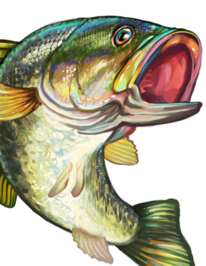 Clipart Fish Bass Fish Clipart Fish Illustration Fish Drawings