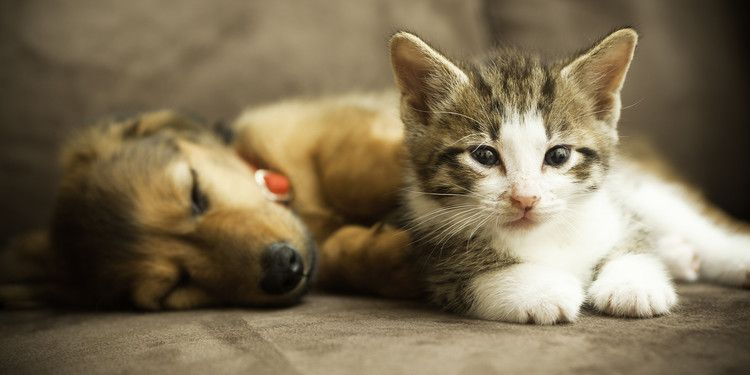 California Will Soon Require Pet Stores To Only Sell Rescue Dogs And Cats Today Pets Dog Cat Cute Animals