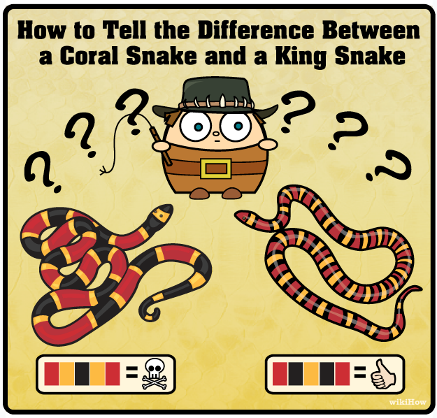 877168569d78 wikiHow to Tell the Difference Between a King Snake and a Coral Snake --  via wikiHow.com (It was a KINGSNAKE