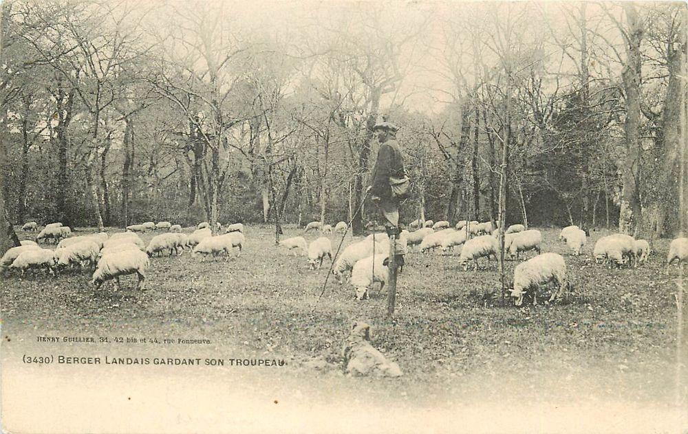 40 LANDES. Berger Landais sur échasses gardant son Troupeau 1908. Vieux Métiers