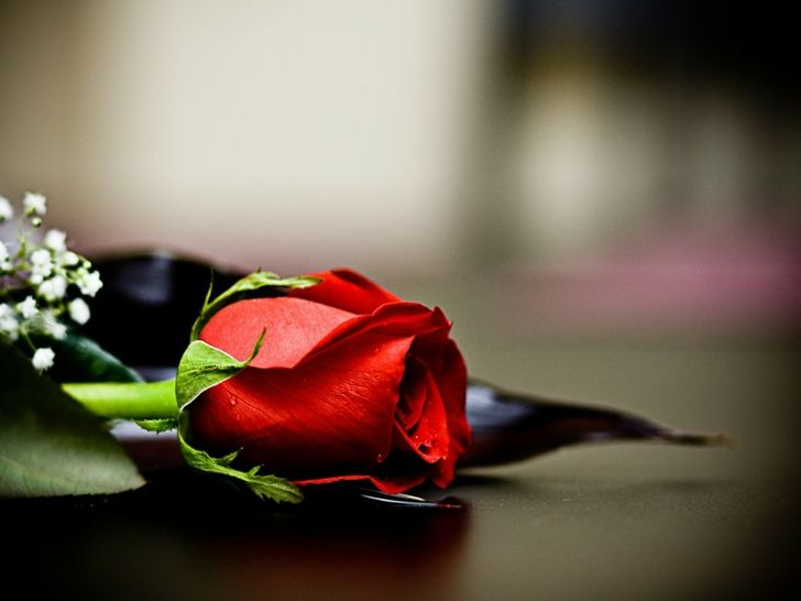 High Res Images For Mobile Screens Red Roses Red Rose Wallpaper