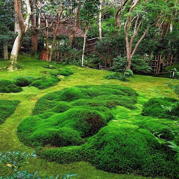 jardin de mousse kyoto jardin de mousse kyoto et mousse. Black Bedroom Furniture Sets. Home Design Ideas