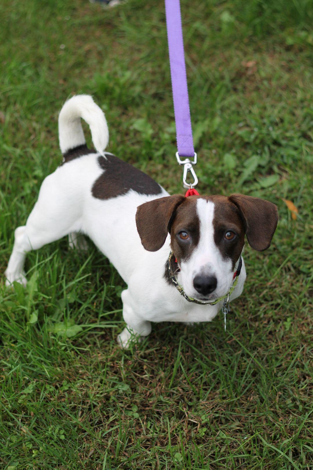 Adopt Hudson On Petfinder Animal Shelter Dog Adoption Animals And Pets