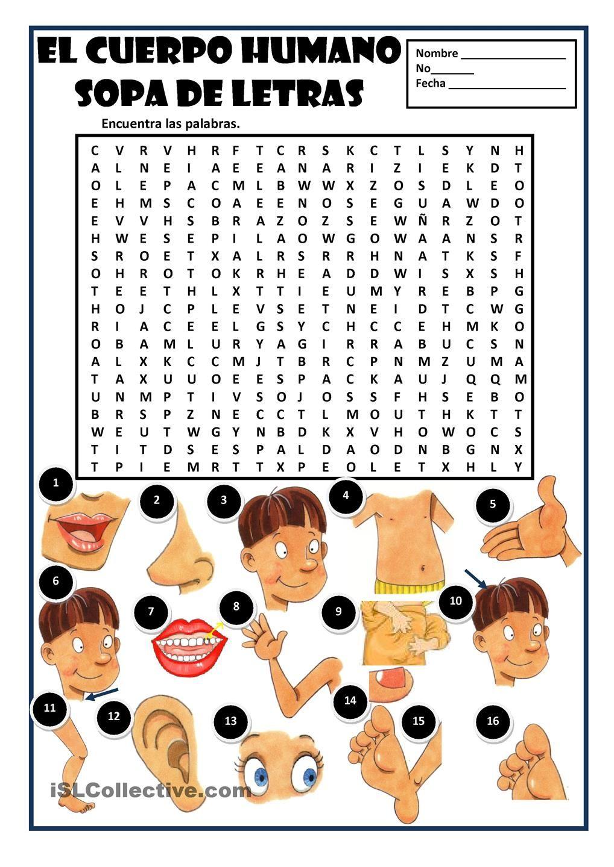 El Cuerpo Humano Worksheet