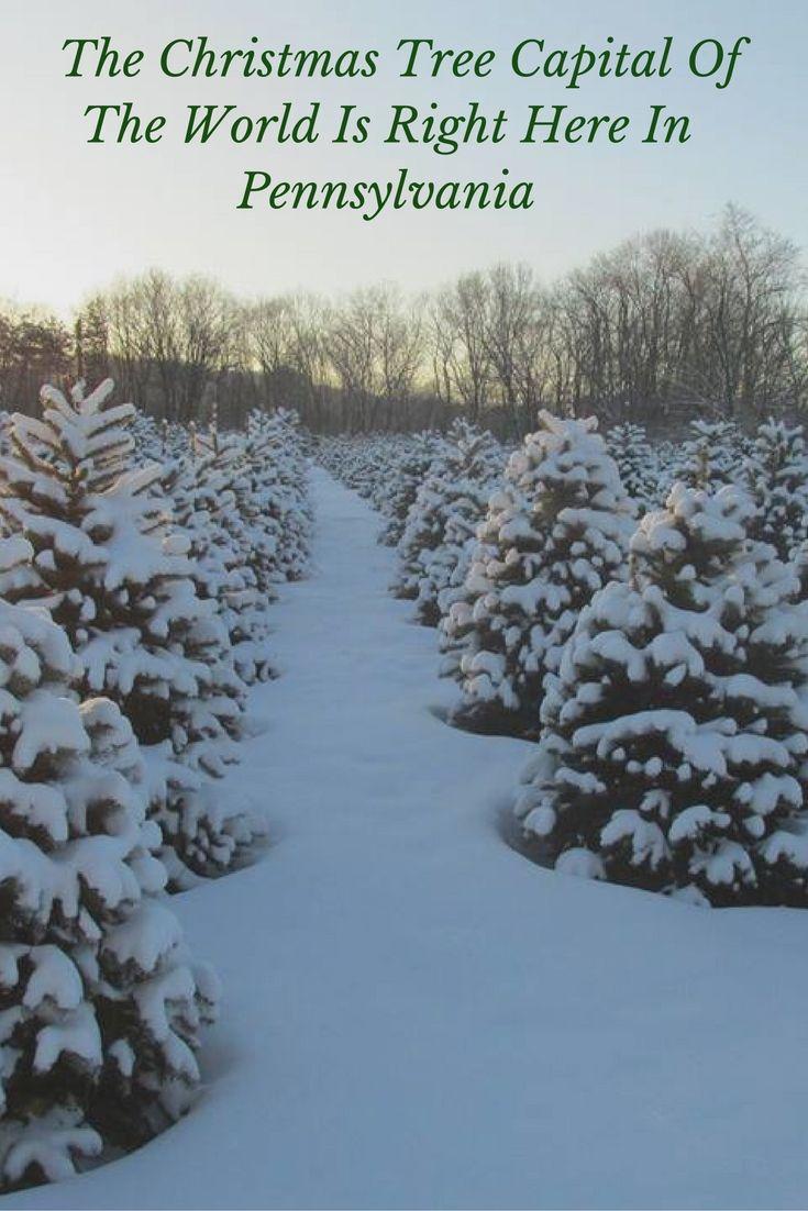 The Christmas Tree Capital Of The World