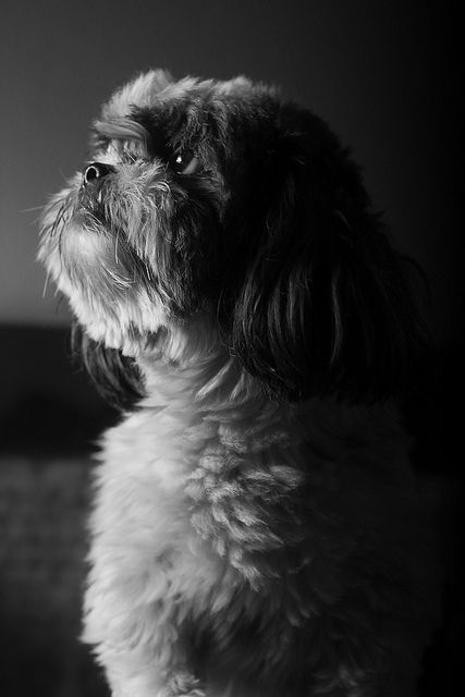 Charlie in deep thought.