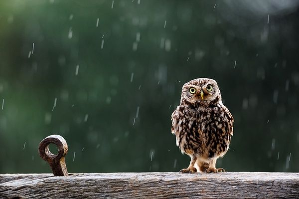 birds of a feather: Photo