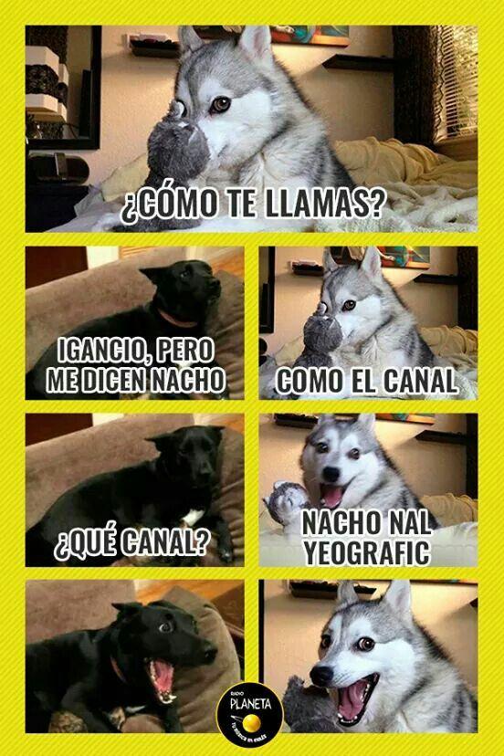 Jajajaja Humor Divertido Sobre Animales Perros Graciosos Memes Divertidos