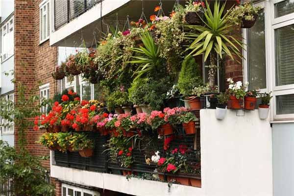 balcony-decorating-flowers-plants (3)