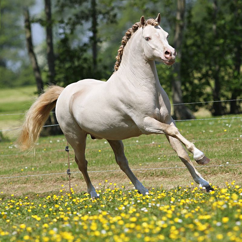 Welsh A | Beauty of Horses | Pinterest | Welsh, Horse and ...