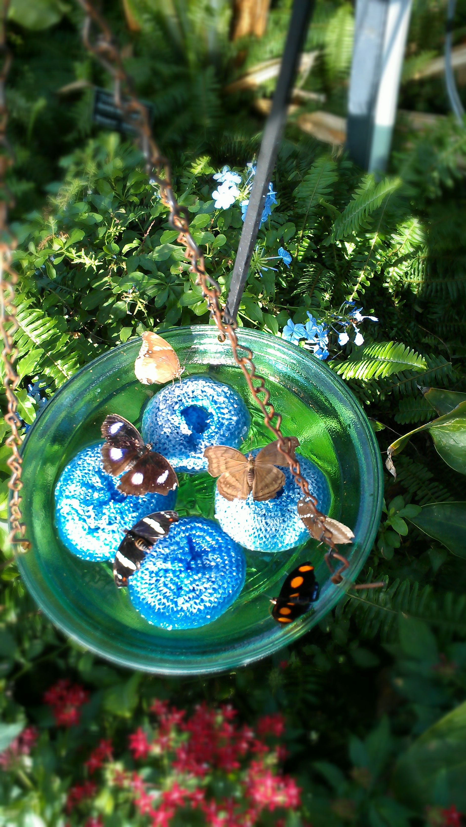 Butterfly Feeder Blue Scrubbies To Serve The Syrup 400 x 300