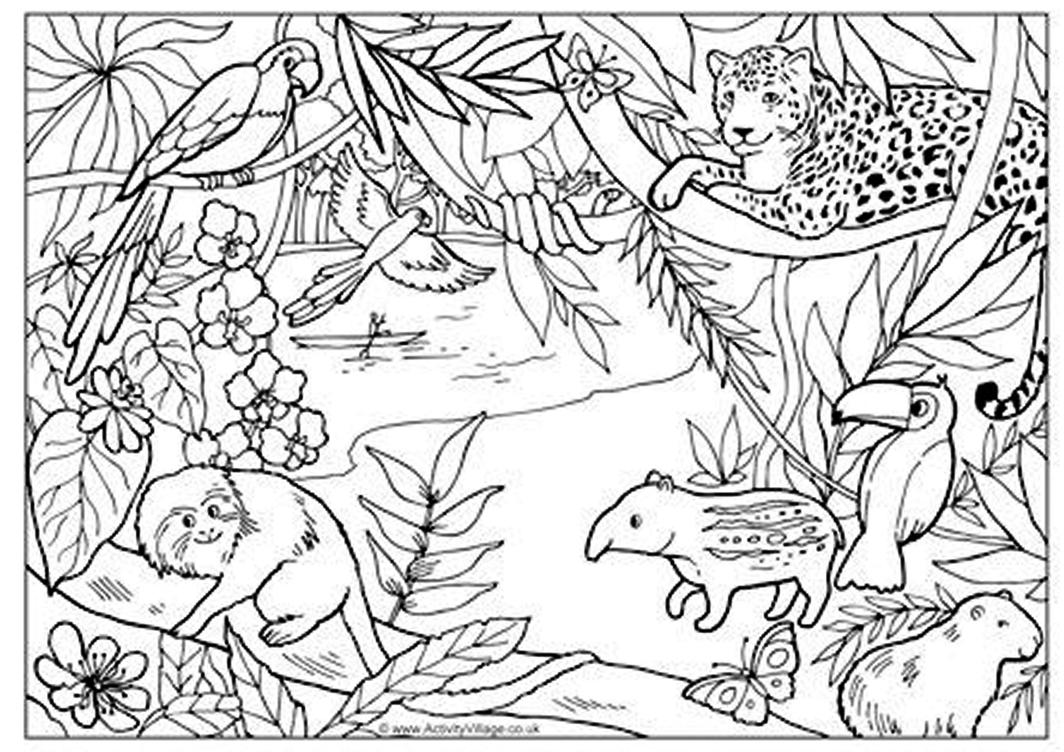 Animales De La Selva Brasileña Mi álbum Animales De La Selva
