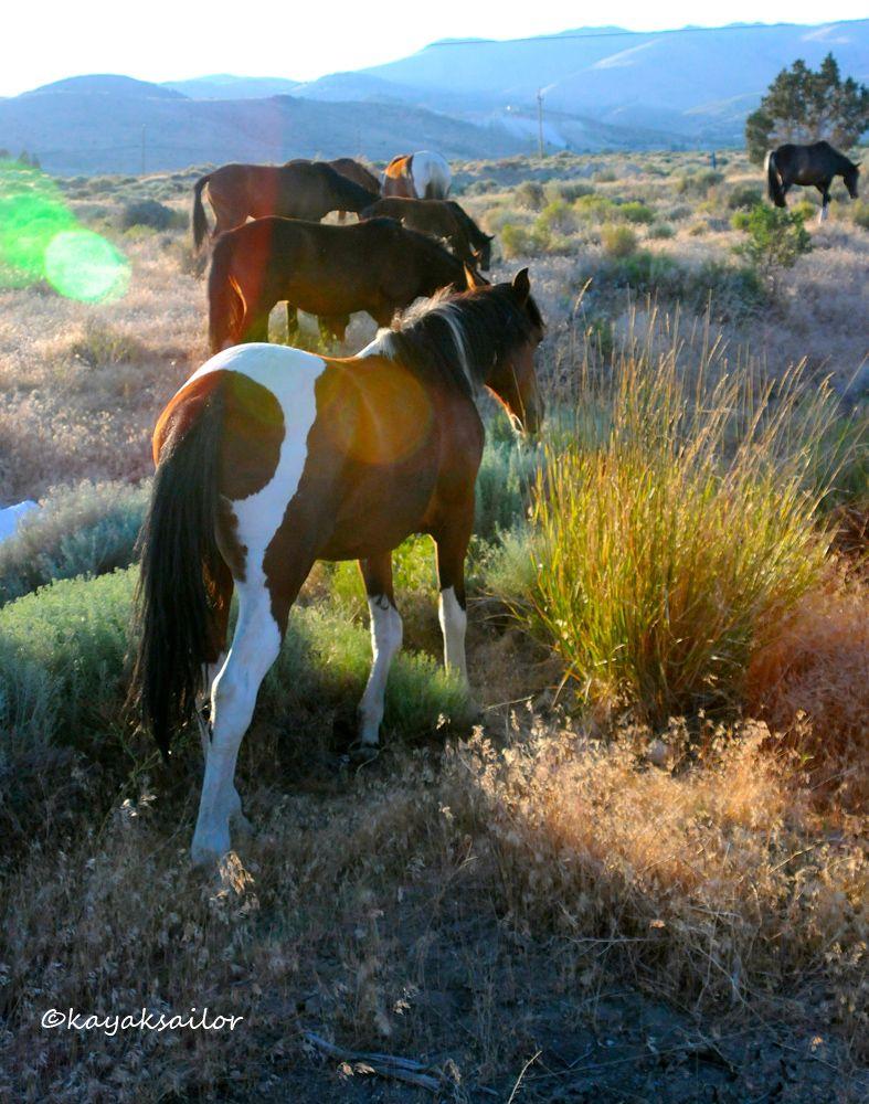 M 225 S De 25 Ideas Incre 237 Bles Sobre Carson City En Pinterest Casa Amarilla Lago Tahoe De Nevada