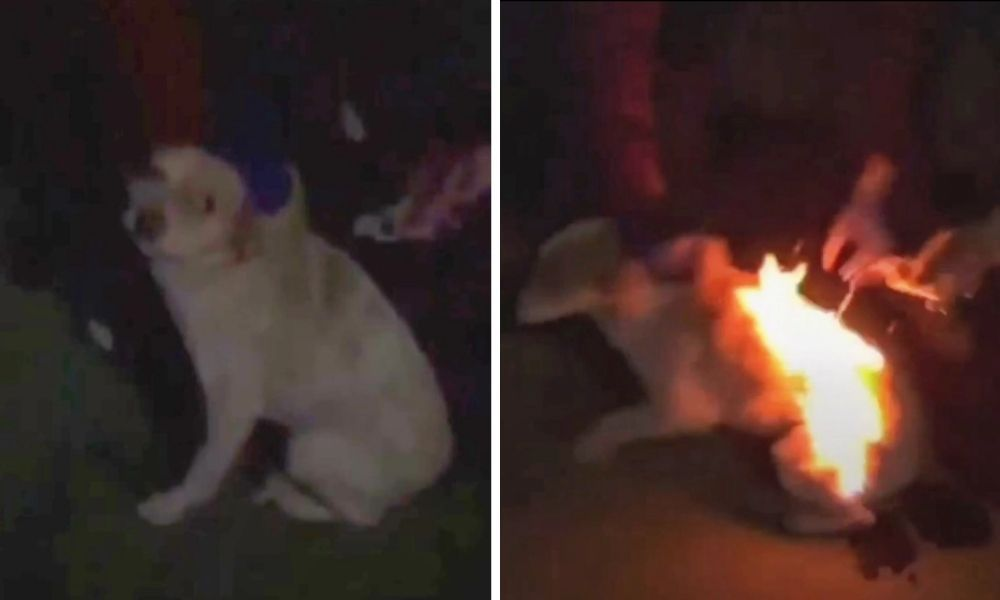 Sign This Petition For Justice For An Innocent Dog Who Was Set On Fire By A Group Seeking Social Media Clout In Romania Animal Advocacy Puppies Animal Abuse