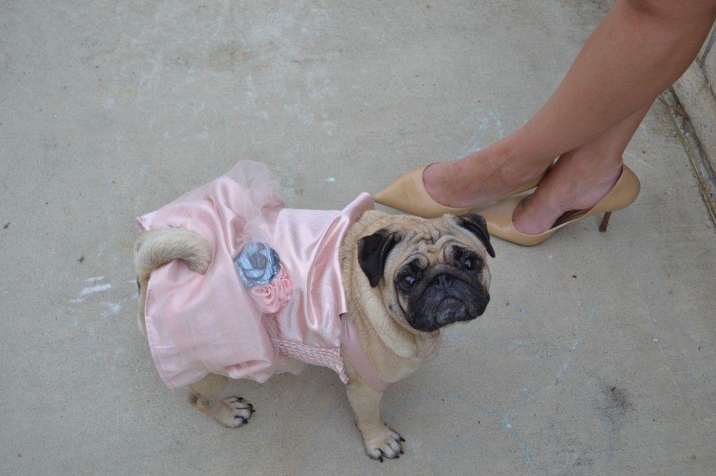 Chloe Bisou looks fancy in her pink dress...