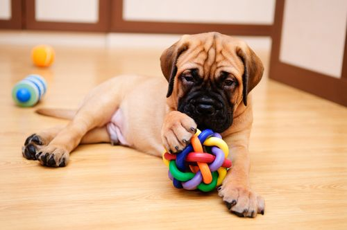 5 Excellent Dog Toys For Mental Stimulation Best Dog Toys Puppy