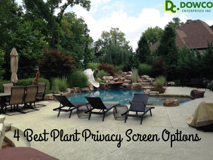 4 Best Plant Privacy Screen Options For St Louis Gardens Dowco Enterprises Inc Lawn Landscape Maintenance Chesterfield Mo