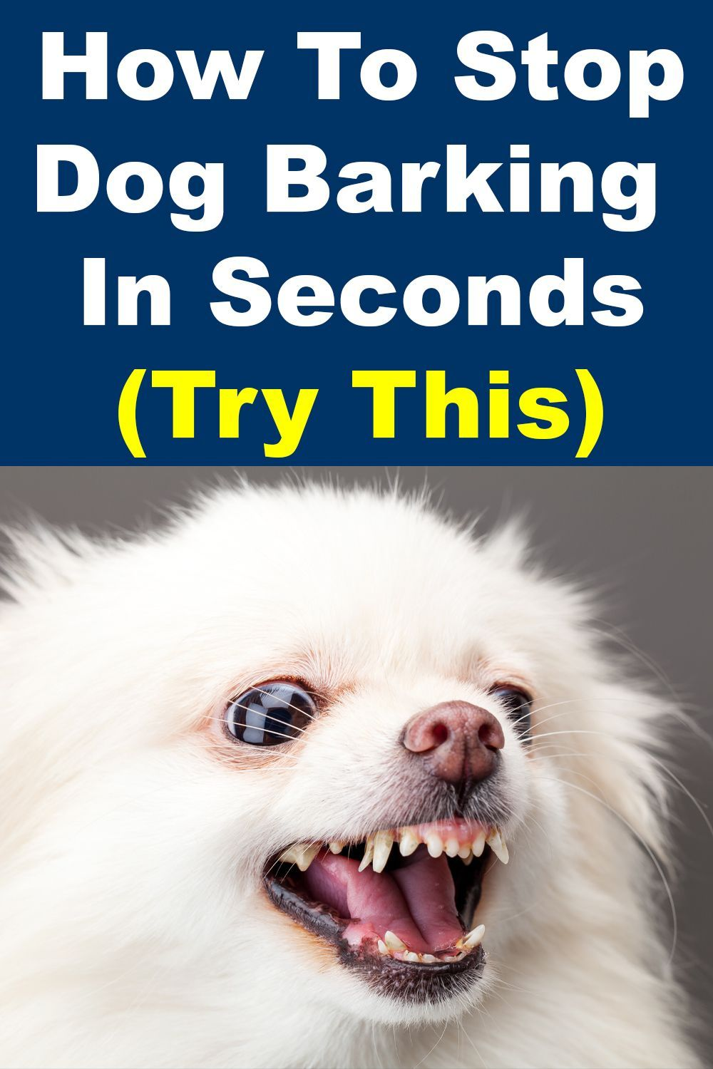 Stop Any Dog From Barking In 2020 Stop Dog Barking Dog Pet Beds Dog Barking