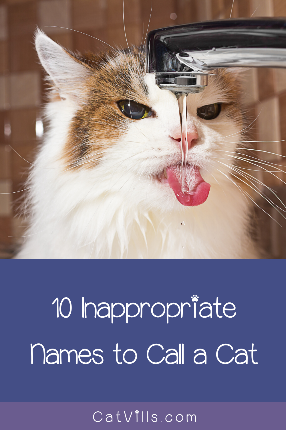 10 Inappropriate Names To Call A Cat Cats Inappropriate Cat Cat Names