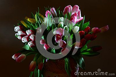 Bouquet of colorful tulips beautiful