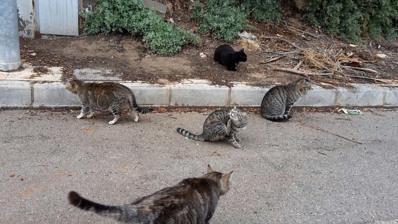 Wild cat Mallorca