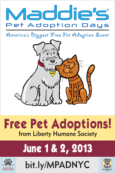 Free Adoptions This Weekend June 1st And 2nd 11am 6pm Saturday And Sunday Free Pet Adoption Adoption Day Pet Adoption