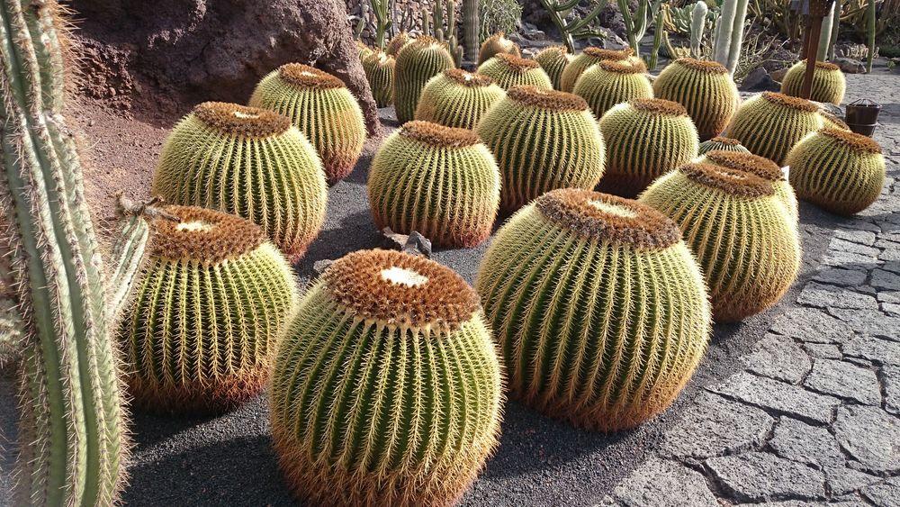 Jardin de Cactus (4)