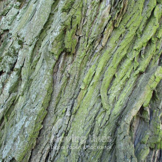 Tree Bark Photo Wallpaper Wood Grain Background by MovingLines