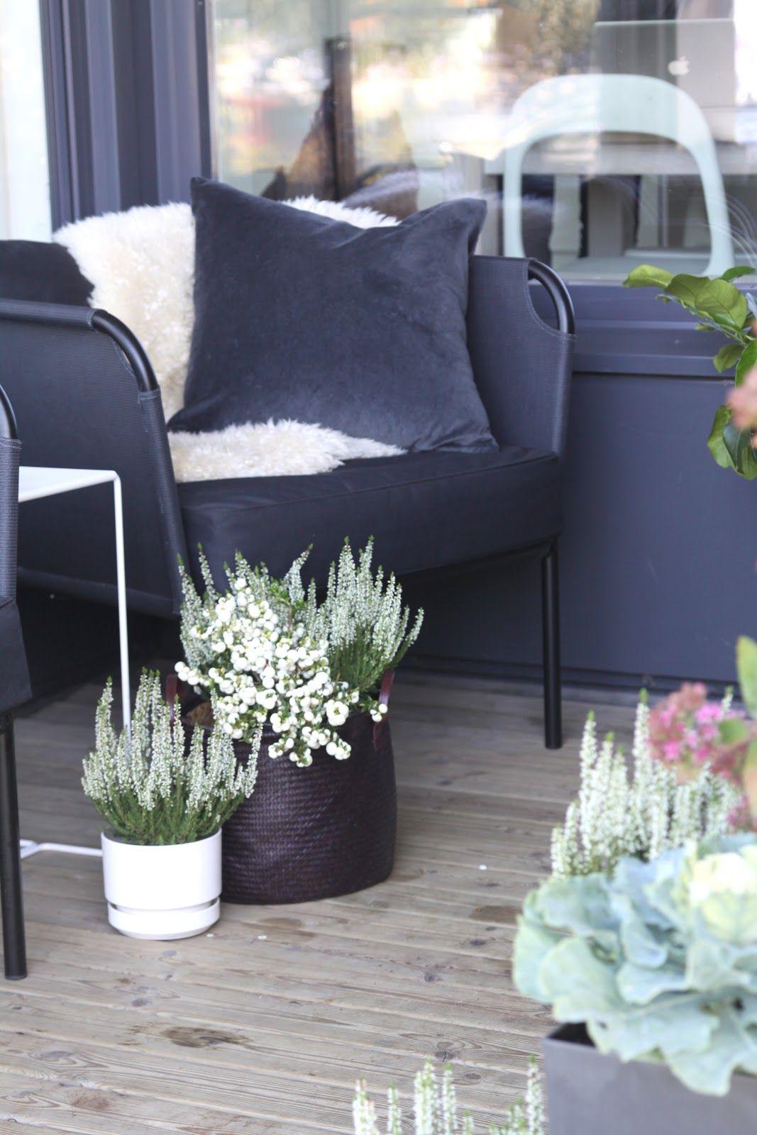 muotoseikka\ Terassin syksy / Autumn plants