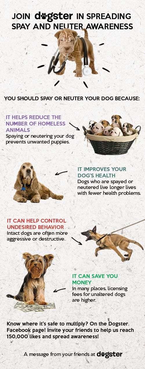 Love Is In The Air And February Is Spay And Neuter Awareness Month Help Us Raise Awareness By Sharing This Infographic Know Where It Pet Vet Pets Pet Safety