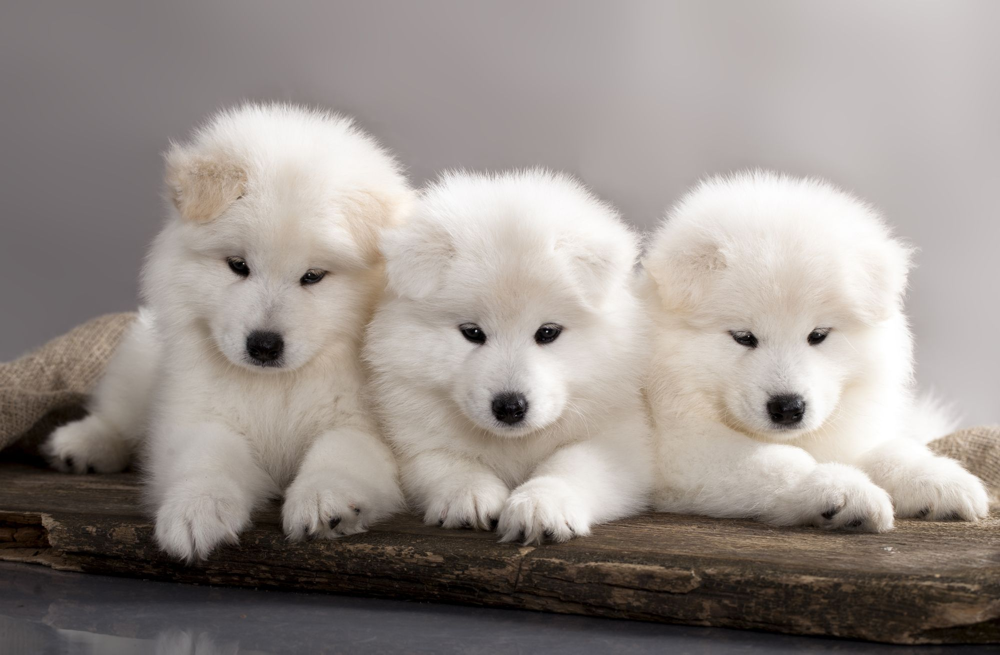 Trained puppies for sale uk