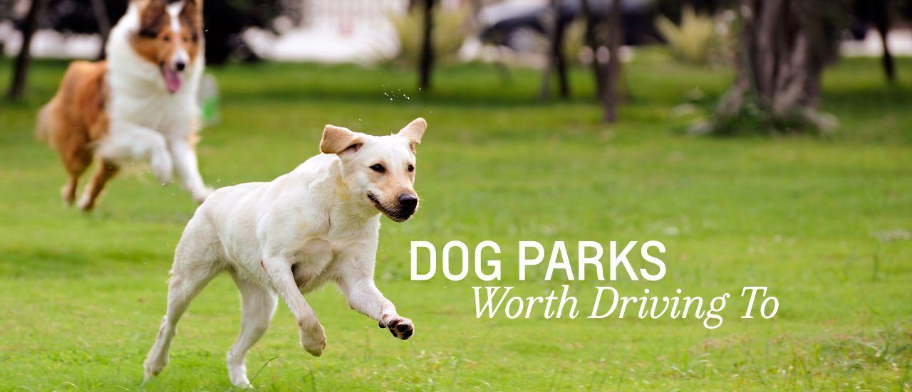 Dog Parks in VA, MI, CA, FL Worth the Drive #travel #dogs #pets
