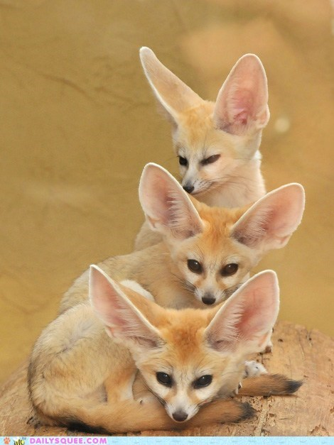 Squee Spree Fennec Totem Pole Animal Pictures Animals Baby Animals