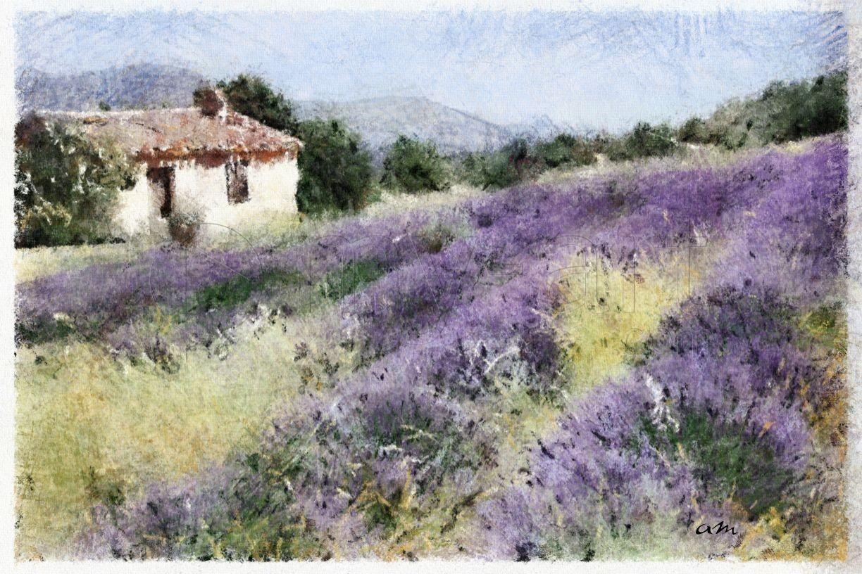 Provence Cabanon Lavandes Peinture Paysage Paysage De Provence