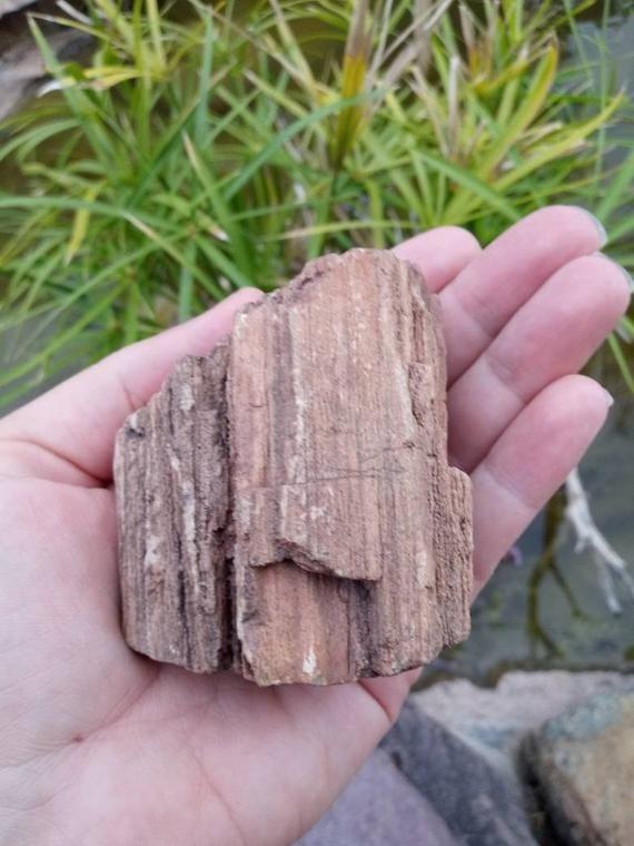 Crystallized Petrified Wood With Drusy Smoky Quartz Points