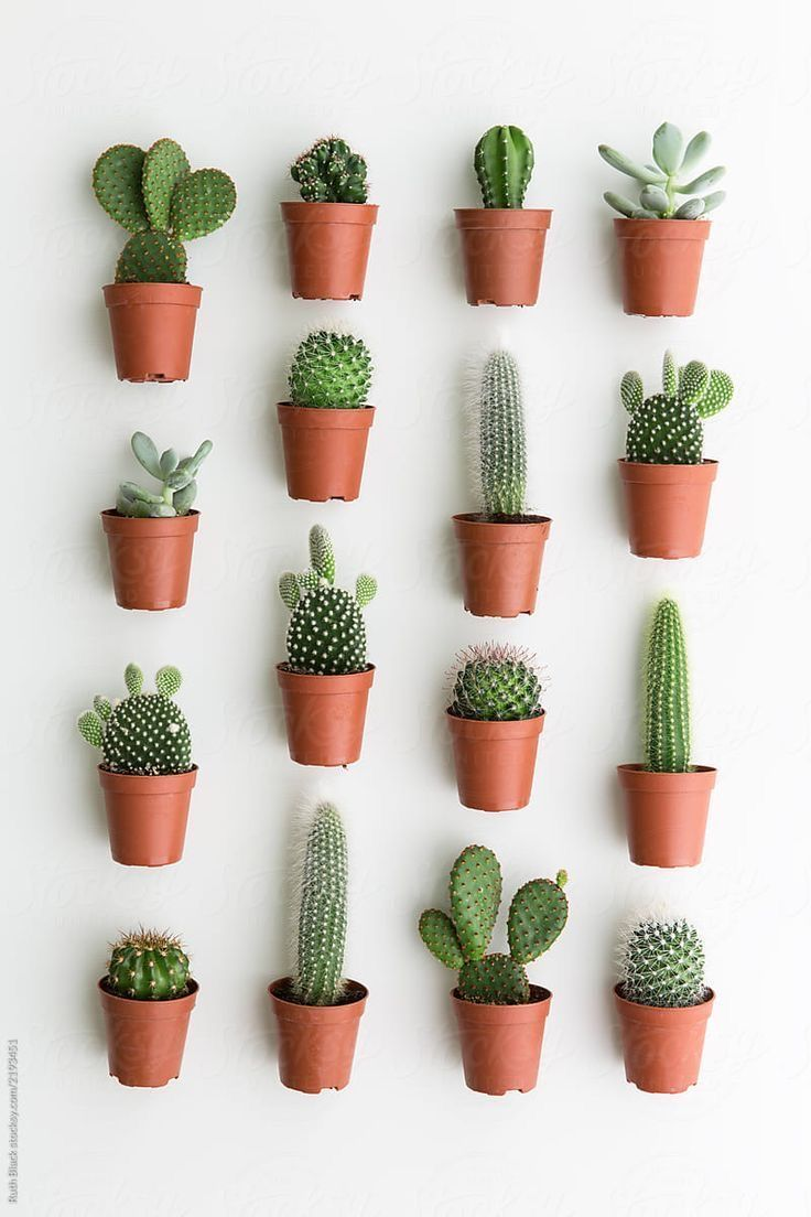 Did you know some cactus are edible? It's a part of
